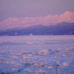 ピンクの流氷