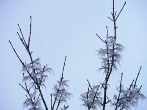 雨氷の樹の先端